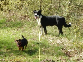 Turbo en Lizzy
