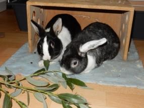 Tobey en Jackey
